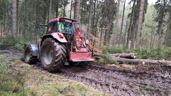 Weiter unten im Dorf ist Familie Koch unterwegs zum Waldeinsatz, denn auch in ihrem Wald müssen Borkenkäfer-Bäume gefällt werden. Dabei ist für Stephan Koch und seine Söhne die erste Arbeitsrunde schon vorbei. Seit morgens waren sie im Stall, denn Kochs sind Nassaus einzige Vollerwerbsbauern.