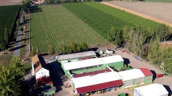 Hopfenhof Regner - das Familienunternehmen aus Prosigk ist einer der größten Produzenten für Hopfen in ganz Deutschland.