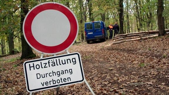 """Verbotsschild """"Holzfällung. Durchgang verboten"""" in einem Wald"""