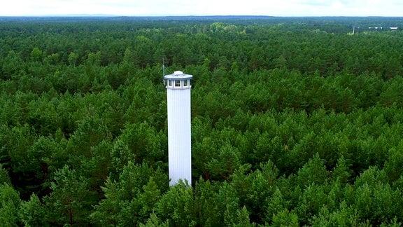 Feuerwachturm in einem Kiefernwald