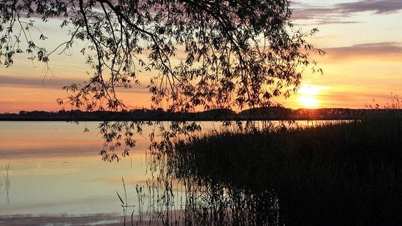 Usedomer Abendstimmung. Blick vom Land aufs Wasser.