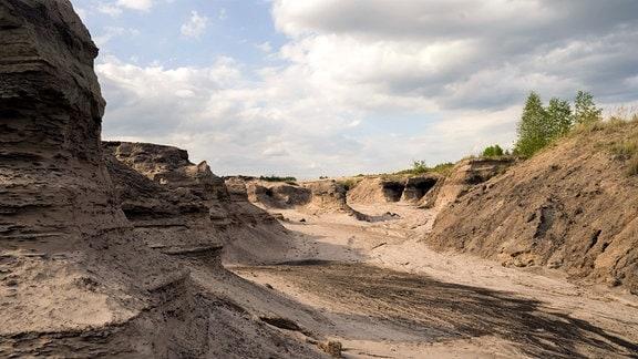 Bergbaunachfolgelandschaft, Hotspot derArtenvielfalt