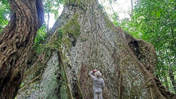 Biwak-Moderator Thorsten Kutschke vor einem Amazonas-Riesen Cacichira Baum