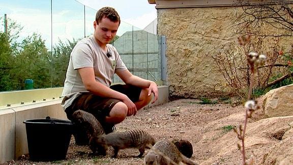 Marc kniet; neben ihm seine Erdmännchen.