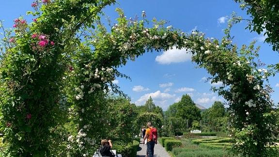 Rosenbögen umsäumen einen Weg. Besucher spazieren darunter hindurch, andere machen Pause auf einer Bank.