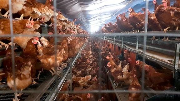 Hühnerbatterie