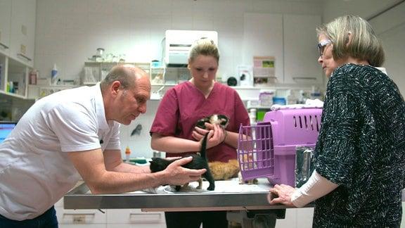 Katzenfindlinge beim Tierarzt