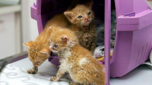 Wilde Miezen Katzenfindlinge beim Tierarzt