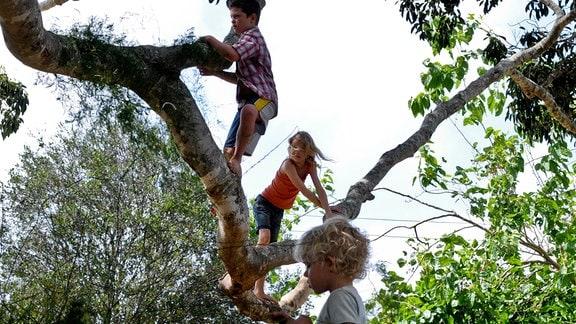 Die Kinder Simone (Morgana Davies, Mitte), Lou (Tom Russell) und Charlie (Gabriel Gotting, re. unten)  und ihr Lieblingsspielplatz: der Baum
