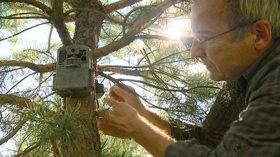 """Automatisch auslösende Kameras ermöglichen heimliche Einblicke ins Familienleben der Wölfe. Tierfilmer Sebastian Koerner nimmt sich viel Zeit, die """"Filmfallen"""" gut zu verstecken."""