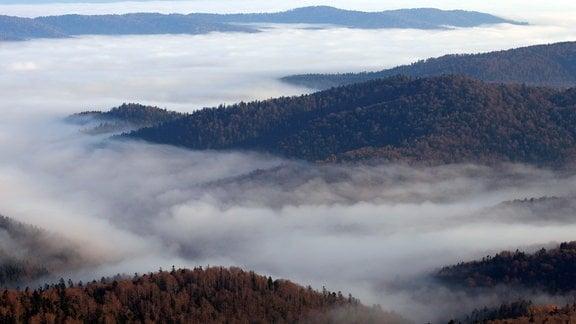 Nebel über den Wäldern und Bergen der Ostkarpaten