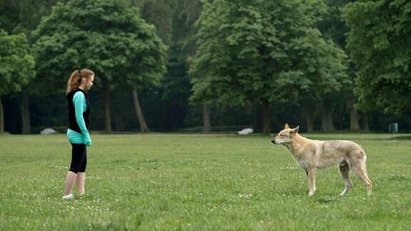 Unheimliche Begegnung - Lea steht beim Joggen plötzlich dem Wolf gegenüber, der ganz Hamburg in Hysterie versetzt hat.