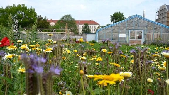 """Die Gärtnerei """"Annalinde"""" im Hochsommer"""