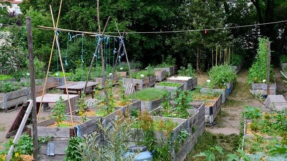 """Garten """"Annalinde"""" in Plagwitz-Lindenau."""