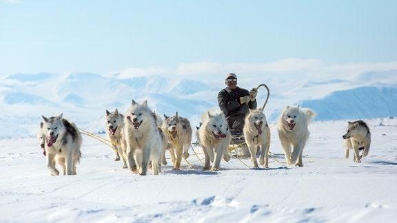 Schlittenhunde ziehen einen Inuit Schlitten.