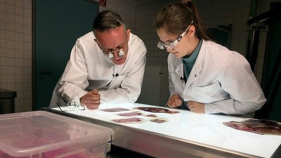 Unbekannte Strukturen im Blick. Doktorandin Dina Wiersbicki und PD Dr. Hanno Steinke untersuchen Wirbelsäulen-Präparate, die von Körperspenden stammen. Sie erforschen daran Rückenschmerzen.