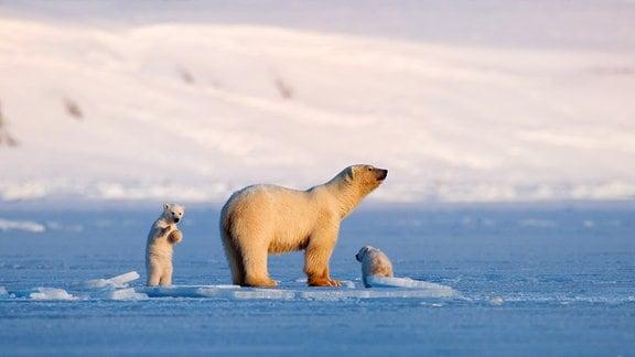 """Eisbärin """"Frost"""" und ihren Jungen"""