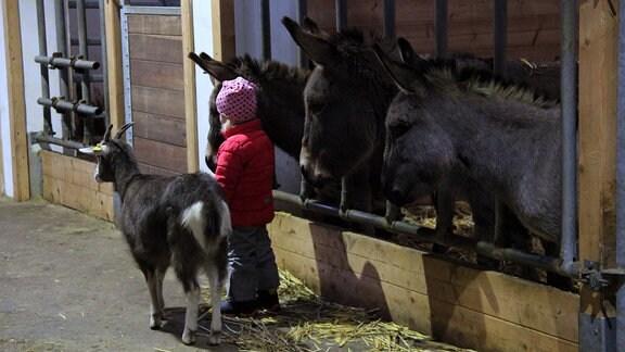 Ein Kind vor einem Stall, in dem Esel stehen. Neben dem Kind steht eine Ziege.