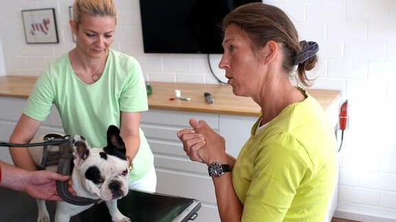 Tierärztin Kirsten Lagemann bei der Arbeit