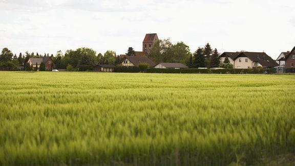 Landschaft in der Altmark