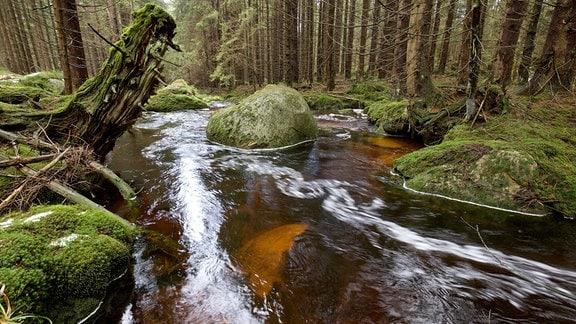 Der Harz ist reich an Niederschlägen, die zahlreiche Waldbäche und Gebirgsflüsse füllen.