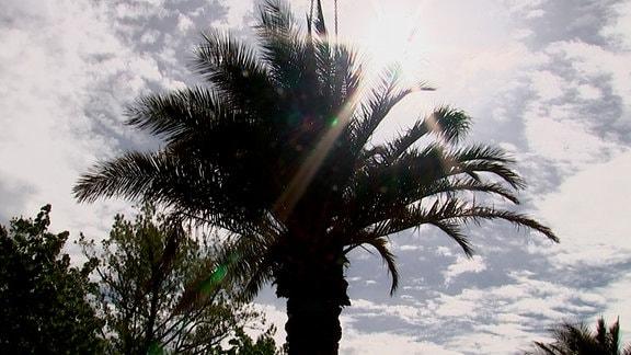 Palmen umtopfen