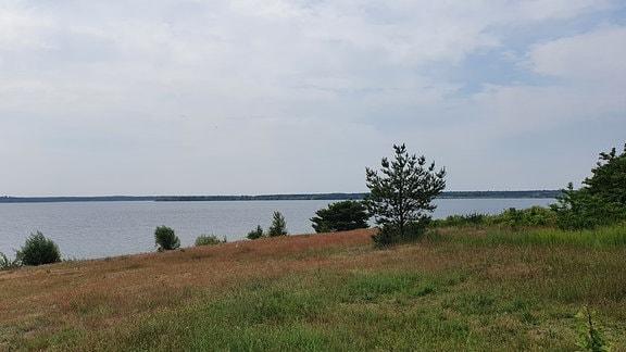 Eine Wiese mit ein paar Sträuchern, im Hintergrund ein See.