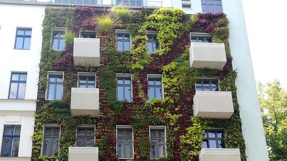 Fassadenbegrünung in Berlin