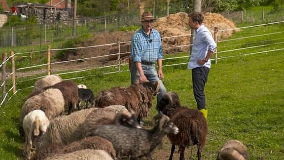 Tino Böttcher (r.) im Gespräch mit Olaf Moeller hinter einigen Schafen.