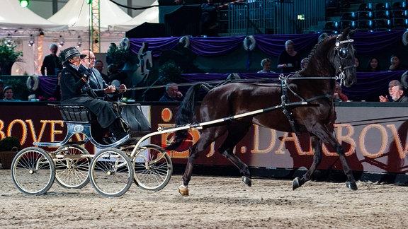 Pferd zieht Wagen