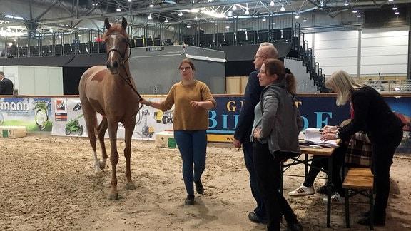Vet-Check bei der Partner Pferd