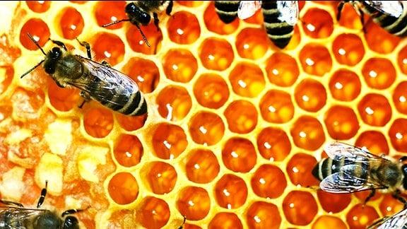 Honigbienen auf einer Honigwabe.