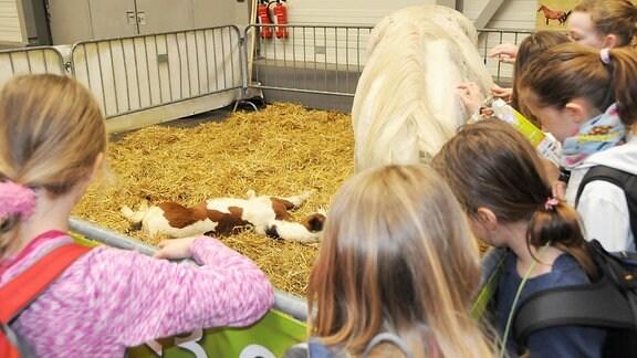 Kinder streicheln ein Pferd. Ein Fohlen liegt im Hintergrund auf Stroh.