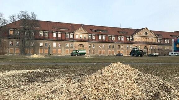 Auf dem Erfurter Petersberg werden seit Mittwoch Bäume für die Bundesgartenschau 2021 gefällt.
