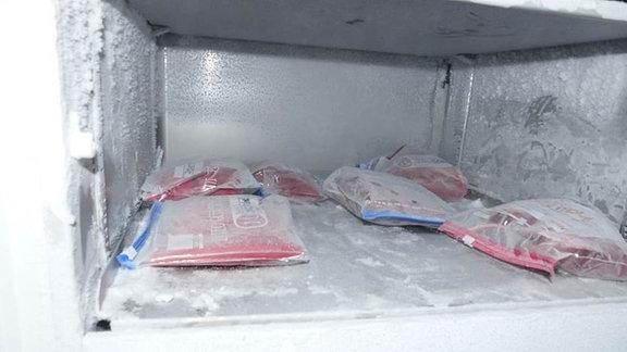 Ein einem vereisten Gefrierfach liegen sechs in Gefrierbeutel mit Reißverschluss verpackte, gefüllte, gefrorene Blutbeutel