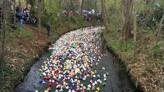 Hunderte bunte Badeenten auf Fluss in Erfurt