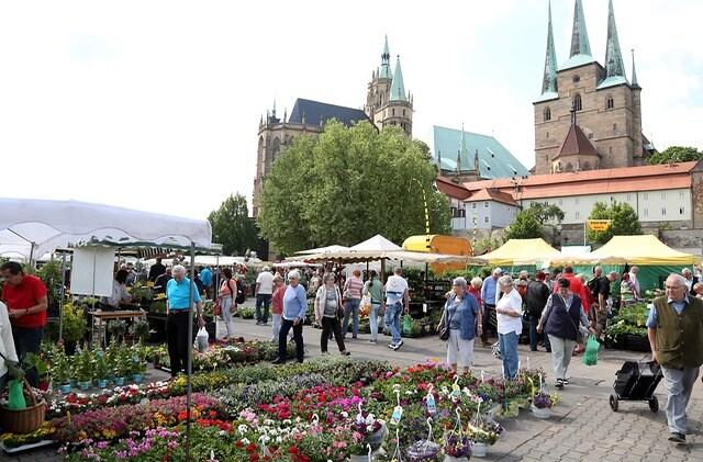 28 Blumen Und Gartenmarkt Taucht Den Domplatz In Farbe Mdrde