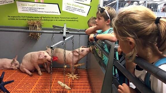 Schweine stehen in einem Gehege und werden von Kindern angeschaut.