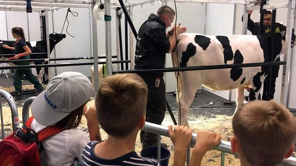 Kinder schauen zu, wie ein Mann eine Kuh frisiert.