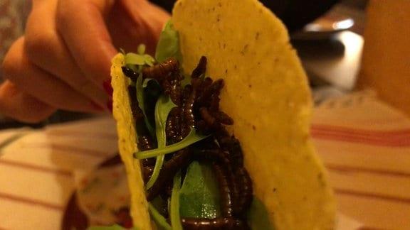 Gebackene Mehlwürmer in einem Tacco.