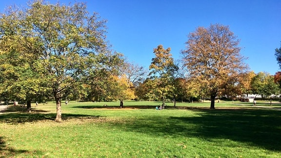 Wiese und Bäume im Erfurter Nordpark