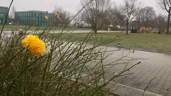 Eine gelbe Blume blüht im Vordergrund eines Hauses.