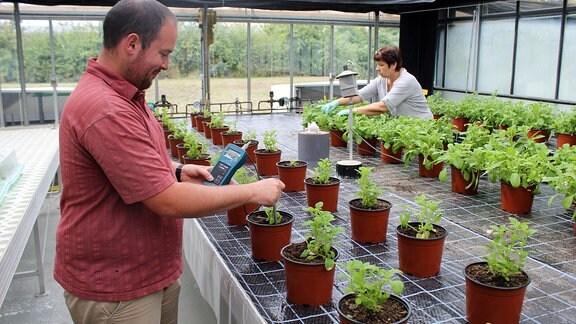 Messen des Nährsalz-Gehalts in Topfpflanzen in einem Gewächshaus
