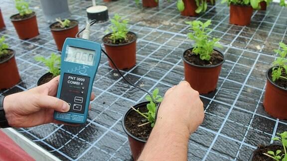 Messgerät misst Nährsalz-Gehalt in Erde von Topfpflanzen