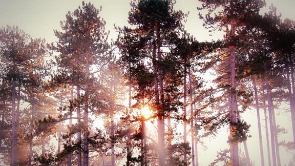 Sonne strahlt durch Bäume bei Arnstadt