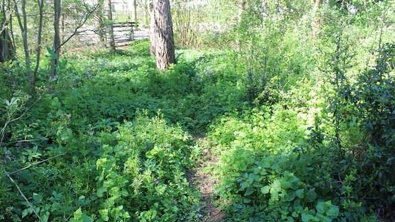 Fast täglich entdecken die Gärtner neue Trampelpfade in den Beeten und Rabatten. Viele Pflanzen sind für immer futsch.