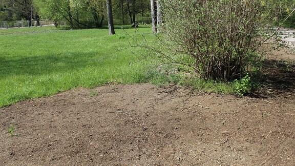 Hier wird derzeit Rasen gesät. Ob der trotz der Trockenheit gedeiht, bleibt fraglich.