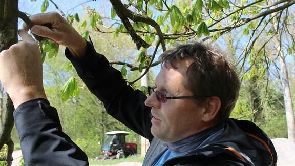 Baumkontrolle gehört zu den täglichen Aufgaben von Stefan Hupel.