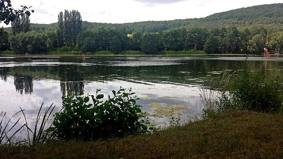 In der unteren Bildhälfte ein mit Schilf und Sträuchern bewachsenes Ufer. Jedoch mit freien Stellen zum Hineingehen. Anschließend über das gesamte Bild ein Teich mit stellenweisen Seepflanzen. Im Hintergrund sind dichte, hügelige Wälder.