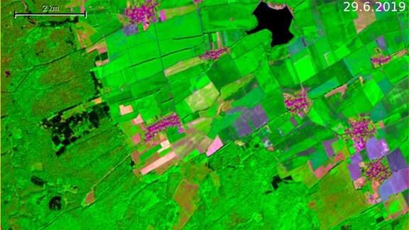 Satellitenaufnahme eines Waldgebietes